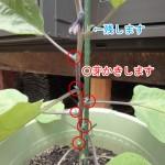 ナスの芽かき