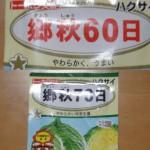 白菜の種まき